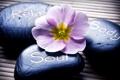 Картинка цветок, надпись, Spa, спа, спа камни, Spa stones, the label