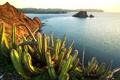 Картинка Senita Cacti, Growing, on Isla Dati