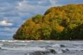 Картинка лес, осень, мыс, небо, облака, птица, волны