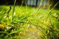 Картинка трава, свет, morning