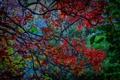 Картинка листья, осень, ветка, багрянец, деревья