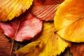 Картинка осень, осенние обои, листва, жёлтый, листок, листья, красивые фото