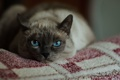 Картинка кошка, глаза, кот