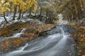 Картинка лес, снег, река, Природа, поздняя осень