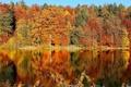 Картинка лес, осень, озеро, листья, скамья, деревья, отражение