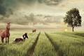Картинка поле, животные, дерево, лошадки