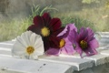 Картинка цветы, фон, скамья