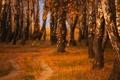 Картинка листья, осень, деревья, фото, природа, парк