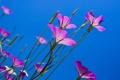 Картинка небо, цветы, синий, ростки, вверх, весна, бутоны