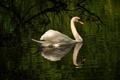 Картинка вода, птица, рябь, грация, лебедь