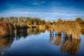 Картинка трава, деревья, озеро, отражение