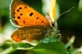 Картинка листья, бабочка, оранжевая, усики, лист