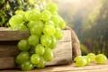 Картинка белый, ягоды, виноград, гроздь, ящик, мешок