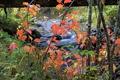 Картинка осень, листья, река, ручей