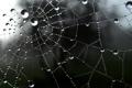 Картинка сеть, падение, drop, water, web
