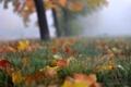 Картинка осень, листья, туман