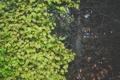 Картинка листья, дерево, листва, зеленые