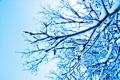 Картинка зима, снег, ветки, природа
