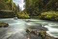Картинка лес, деревья, природа, река, камни, поток