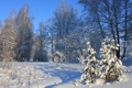 Картинка зима, снег, деревья, ель, тени, ёлки