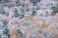 Картинка осень, лес, снег, краски, склон, Канада, Онтарио