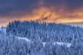 Картинка зима, лес, закат