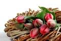 Картинка бутоны, тюльпаны, tulips, ветки, bud, spring, цветы