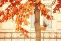 Картинка осень, забор, дерево