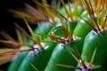 Картинка зеленый, капля, кактус, колючки, шипы