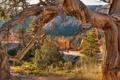 Картинка USA, canyon, parks, Utah., bryce