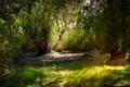 Картинка солнце, природа, луч