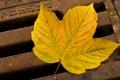 Картинка осень, макро, лист, железо, решотка