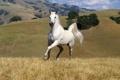 Картинка трава, горы, Лошадь, белоя