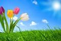 Картинка цветы, Солнце, Природа