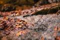 Картинка листья, река, ручей, Весна, речка