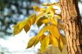 Картинка листья, осень, небо, ветка, дерево
