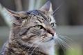 Картинка кот, усы, серый