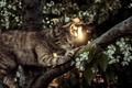 Картинка кот, лапки, кошак, котяра, дерево