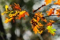 Картинка осень, листья, цвета, природа, фото, обои, яркие