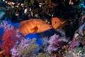 Картинка море, океан, рыба, под водой, underwater, sea, ocean