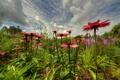 Картинка поле, небо, трава, облака, цветы, луг