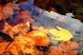 Картинка осень, вода, природа, листва