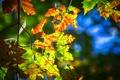 Картинка листья, осень, свет, ветка, макро