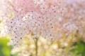 Картинка макро, цветы, гроздь, белые