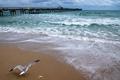 Картинка побережье, Атлантический океан, чайка, Atlantic Ocean, мост