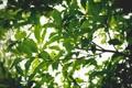 Картинка зелень, листья, ветки, дерево, ветви, крона