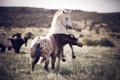 Картинка природа, игра, кони, лошади, драка, пара