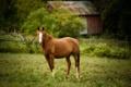 Картинка конь, лошадь, пастбище