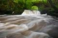 Картинка лес, природа, река, поток