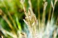 Картинка лето, поляна, растения, колоски, травинки